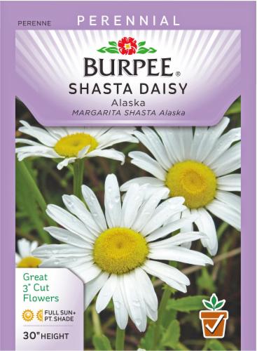 Burpee Alaska Shasta Daisy Seeds Perspective: front
