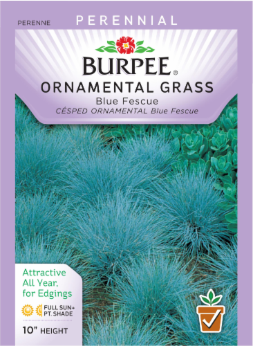 Burpee Blue Fescue Ornamental Grass Seeds Perspective: front