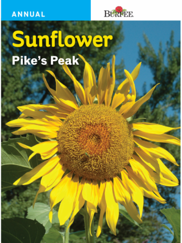 Burpee Pike's Peak Sunflower Seeds - Yellow Perspective: front