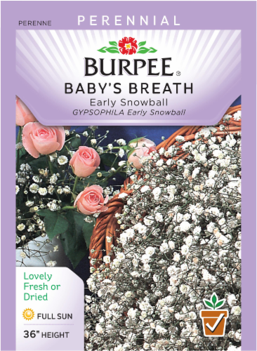 Burpee Early Snowball Baby's Breath Seeds Perspective: front