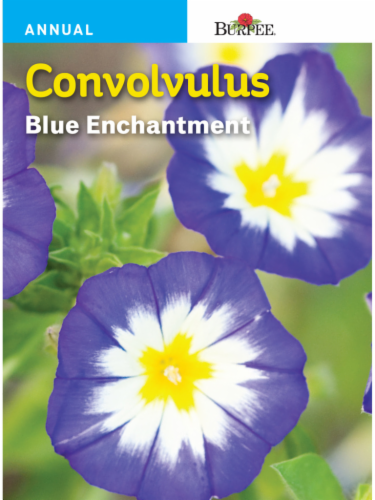 Burpee Convolvulus Blue Enchantment Seeds Perspective: front