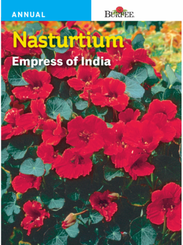 Burpee Nasturtium Empress of India Seeds - Red Perspective: front