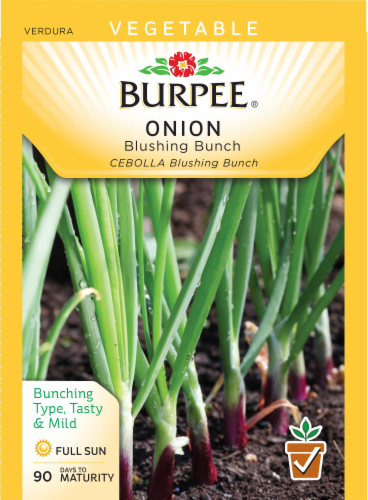 Burpee Blushing Bunch Onion Seeds Perspective: front
