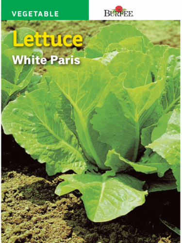 Burpee Paris White Lettuce Seeds Perspective: front