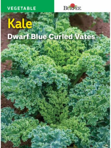 Burpee Dwarf Blue Curled Vates Kale Seeds - Blue Perspective: front