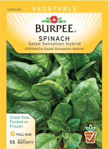 Burpee Salad Sensation Hybrid Spinach Seeds Perspective: front