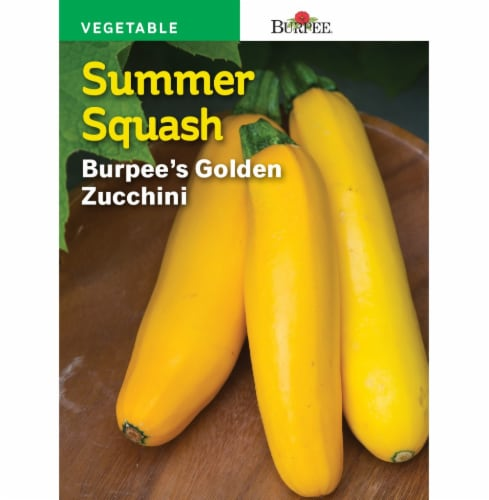 Burpee Golden Zucchini Summer Squash Seeds Perspective: front