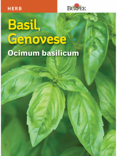 Burpee Genovese Basil Seeds - Green Perspective: front