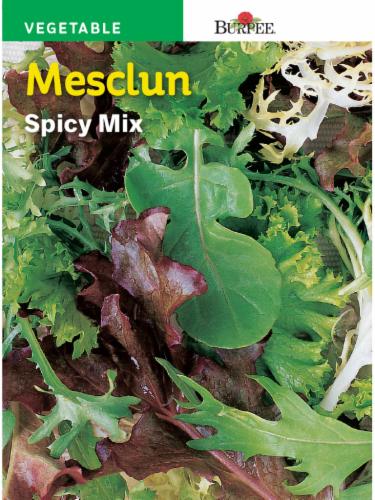 Burpee Spicy Mesclun Mix Seeds Perspective: front