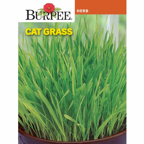 Burpee Cat Grass Herb Seeds Perspective: front
