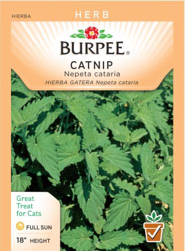 Burpee Catnip Seeds Perspective: front