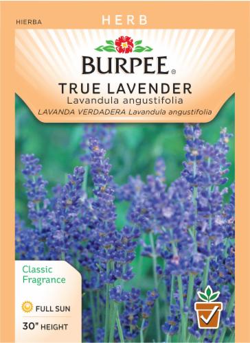 Burpee Herb True Lavender Lavandula Angustifolia Perspective: front