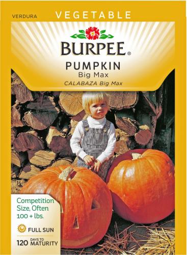 Burpee Pumpkin Big Max Seeds - Orange Perspective: front