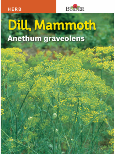 Burpee Mammoth Dill Seeds Perspective: front