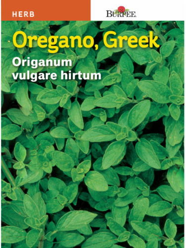 Burpee Oregano Seeds Perspective: front