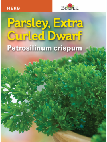 Burpee Extra Curly Dwarf Parsley Seeds Perspective: front