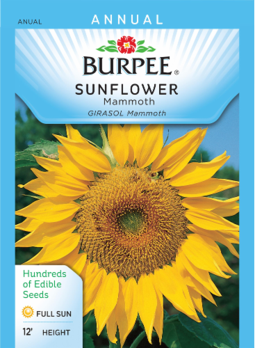 Burpee Mammoth Sunflower Seeds Perspective: front