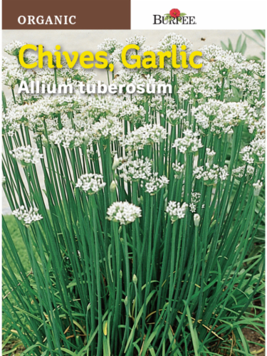 Burpee Organic Garlic Chive Seeds Perspective: front