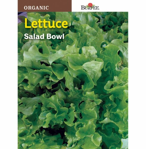 Burpee Organic Salad Bowl Lettuce Seeds Perspective: front