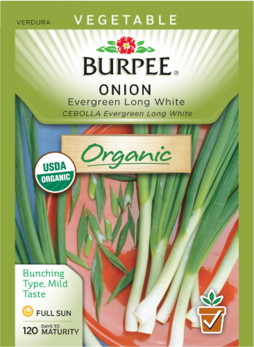 Burpee Evergreen Organic Long White Bunching Onion Seeds Perspective: front