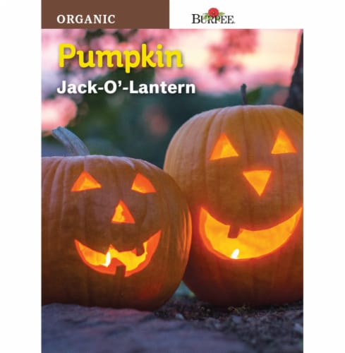 Burpee Jack O Lantern Organic Pumpkin Seeds - Orange Perspective: front