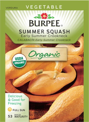 Burpee Organic Early Summer Crookneck Squash Seeds Perspective: front