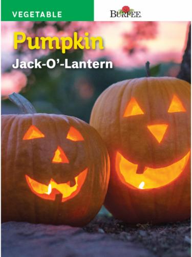 Burpee Jack O' Lantern Pumpkin Seeds Perspective: front