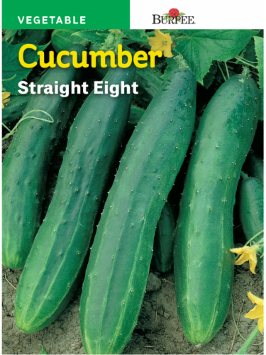 Burpee Straight Eight Heirloom Cucumber Seeds Perspective: front