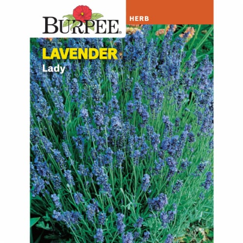 Burpee Lavender Lady Seeds Perspective: front