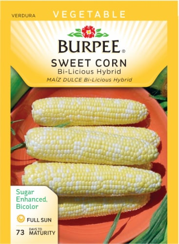 Burpee BiLicious Hybrid Sweet Corn Seeds Perspective: front