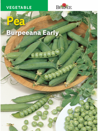 Burpee Burpeanna Early Pea Seeds Perspective: front