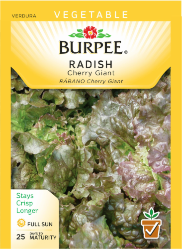 Burpee Cherry Giant Radish Seeds Perspective: front