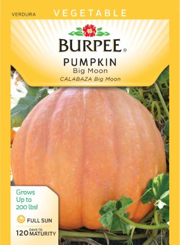 Burpee Big Moon Pumpkin Seeds Perspective: front