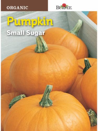 Burpee Small Sugar Organic Pumpkin Seeds - Orange Perspective: front