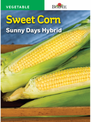 Burpee Sunny Days Hybrid Sweet Corn Seeds - Yellow Perspective: front