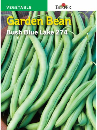 Burpee Blue Lake 274 Bush Bean Seeds - Green Perspective: front