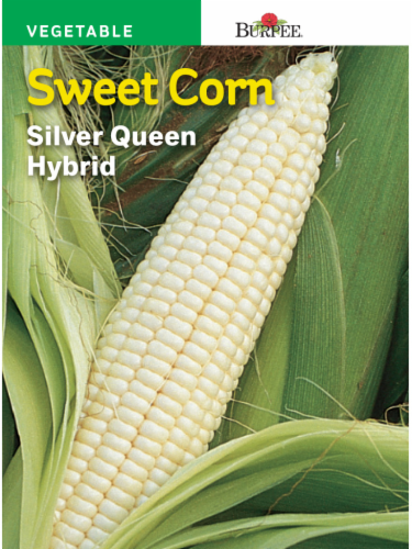 Burpee Silver Queen Hybrid Corn Seeds Perspective: front