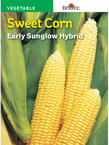 Burpee Early Sunglow Hybrid Corn Seeds - Yellow Perspective: front