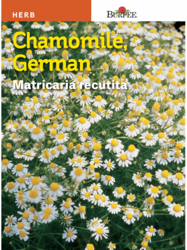 Burpee German Chamomile Seeds Perspective: front