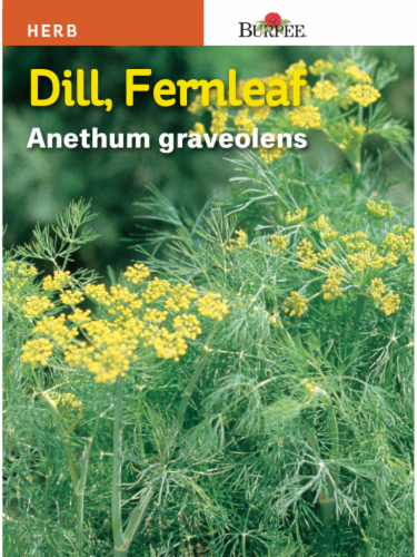Burpee Fernleaf Dill Seeds Perspective: front
