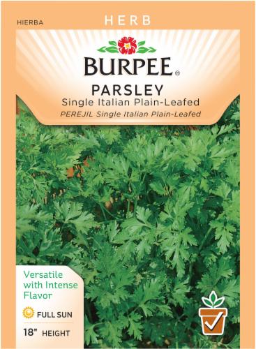 Burpee Single Italian Plain-Leaf Parsley Seeds Perspective: front