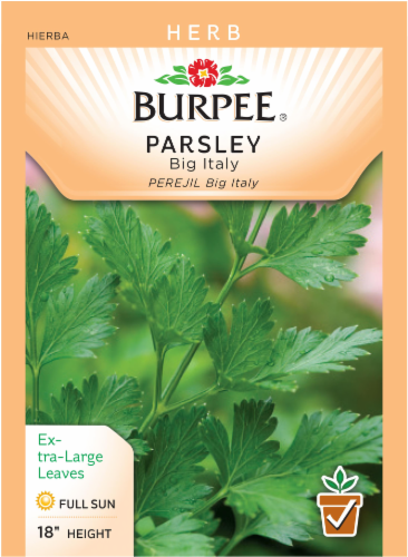 Burpee Big Italy Parsley Seeds Perspective: front