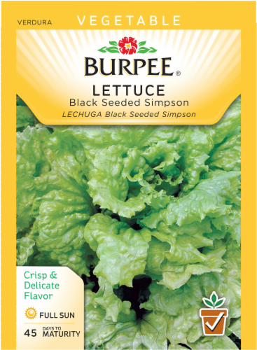 Burpee Black Seeded Simpson Lettuce Seeds - Green Perspective: front