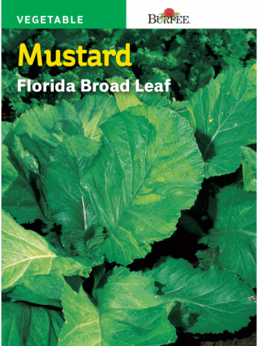 Burpee Mustard Florida Broad Leaf Seeds - Green Perspective: front