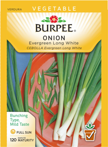 Burpee Evergreen Long White Bunching Onion Seeds Perspective: front