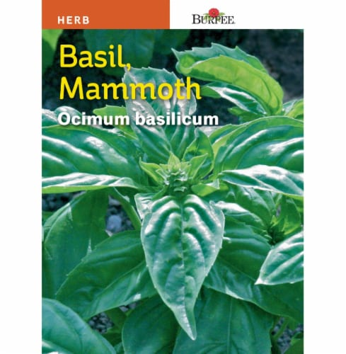 Burpee Mammoth Basil Seeds Perspective: front