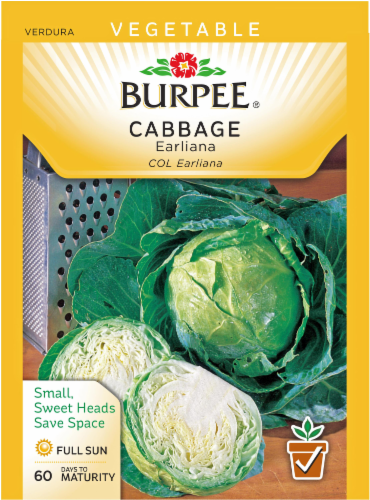 Burpee Earliana Cabbage - Green Perspective: front