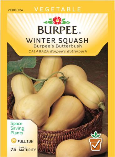 Burpee Butterbush Winter Squash Seeds - Tan Perspective: front