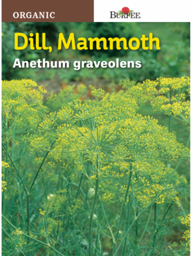 Burpee Mammoth Dill Herb Seeds - Green Perspective: front