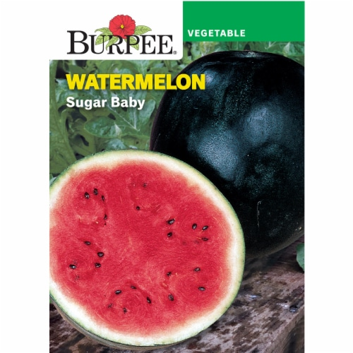 Burpee Blush Sugar Baby Watermelon Seeds Perspective: front